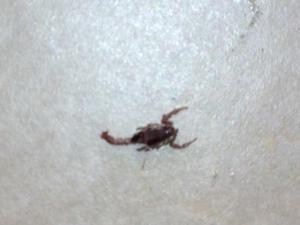 DEAD scorpion!