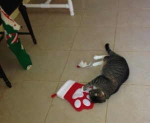 Treats and a Christmas mousey - it doesn't get any better than that for a kitty Christmas!