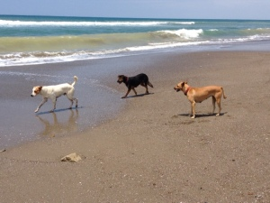 My beach buddies - L to R: Coby, Vera & Bruna