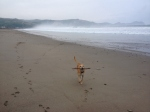 Playing fetch on the misty morning beach