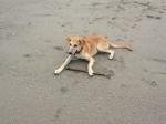 Guarding his precious stick