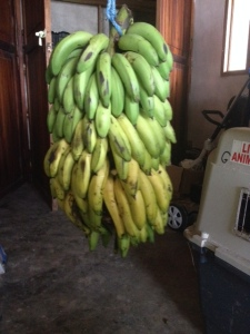 So how many bananas can YOU buy for $3.50?