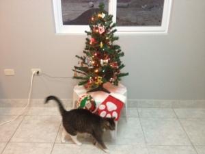 "Charcoal says, ""Yea Mommy, it's Christmas!"""