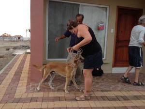 Elaine and Mesfin bringing Tag home