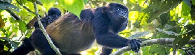 Momma monkey and baby in Pacoche (Credit: Pacoche Lodge)