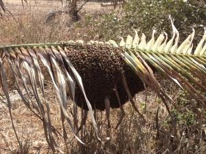 A beautiful swarm!