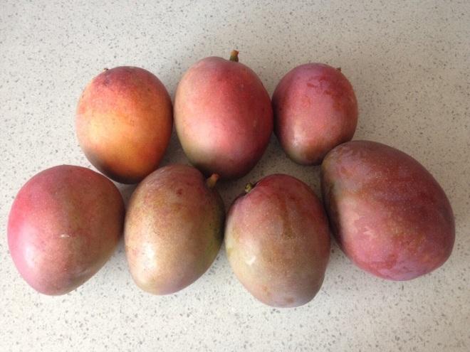 Mesfin's mangoes