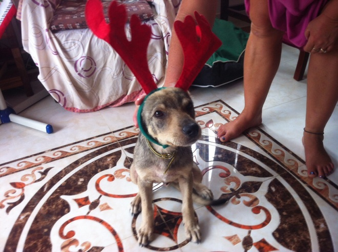 Pumba reindeer